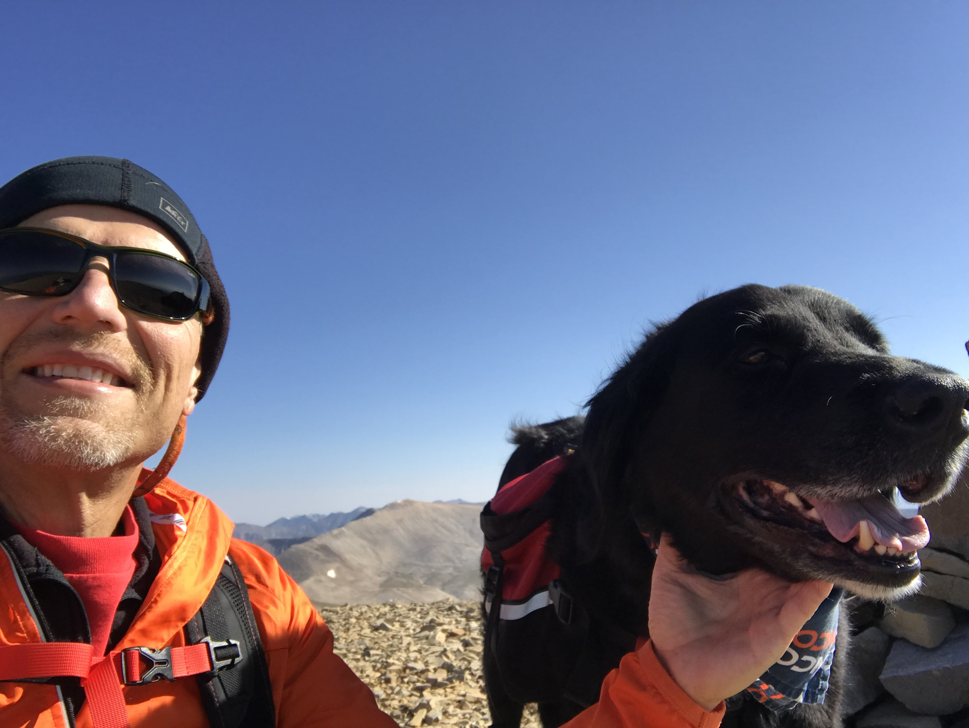 Sweaty person with sweaty dog, high up in the mountains.