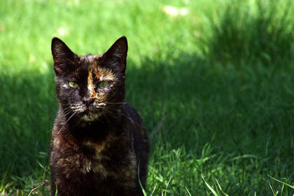 Photo of a black cat standing on grass