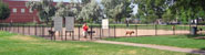 dogs play in a fenced dog park