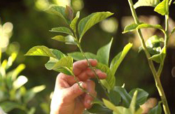 Tree Planting & Removal Resources for Property Owners
