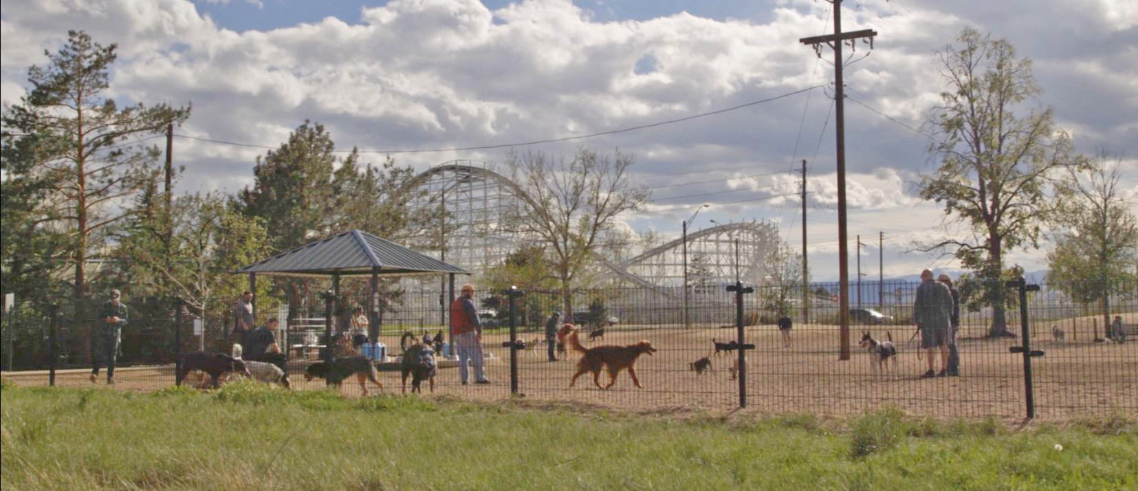 Image of Berkeley Dog Park. People can be observed with their dogs, there is an amusement park ride in the background