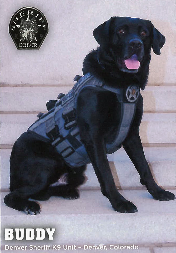Denver  Sheriff K9 Unit, Buddy