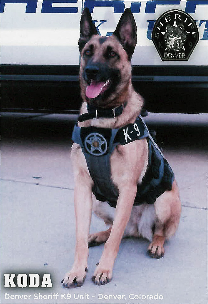 Denver  Sheriff K9 Unit, Koda