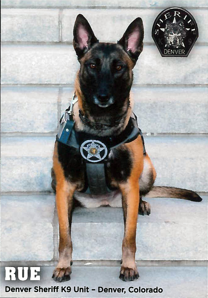 Denver  Sheriff K9 Unit, Rue