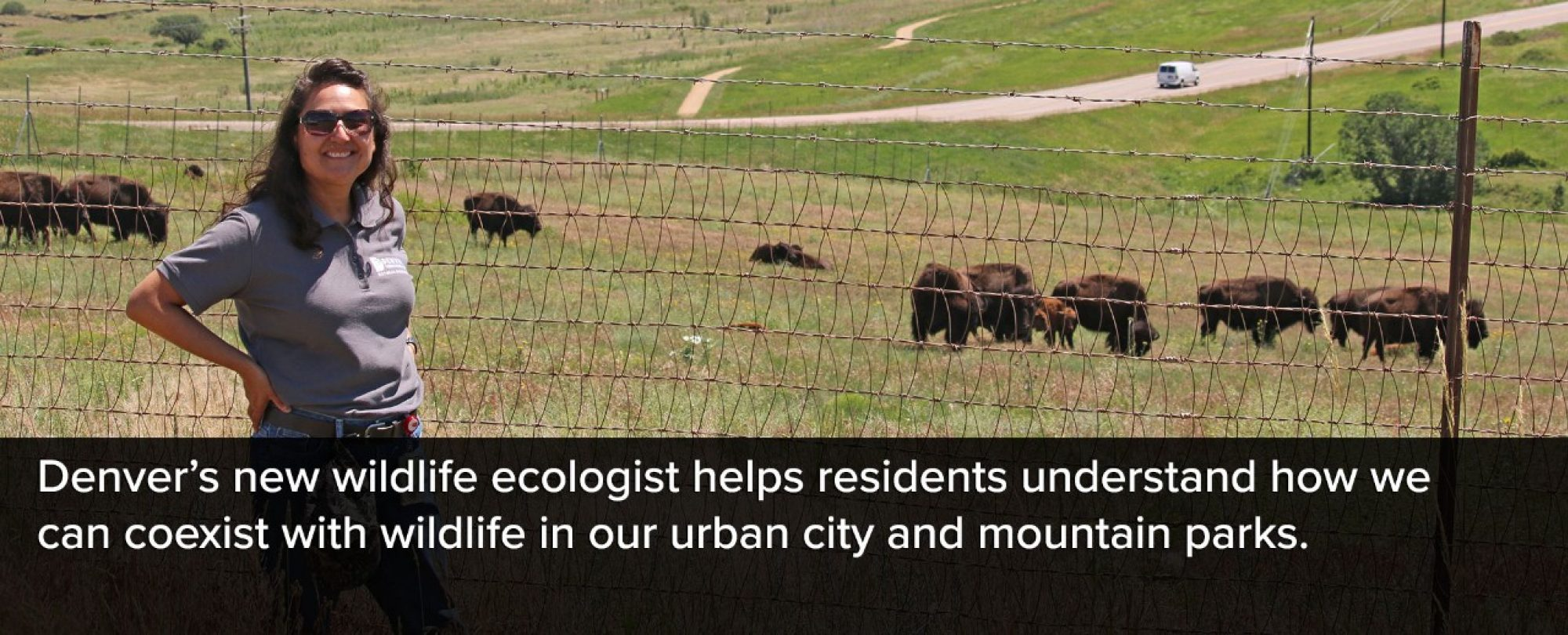Photo of Denver Parks and Recreation's new wildlife ecologist at the Genessee Park Buffalo habitat. Denver's new wildlife ecologist helps residents understand how we can coexist with wildlife in our urban city and mountain parks.